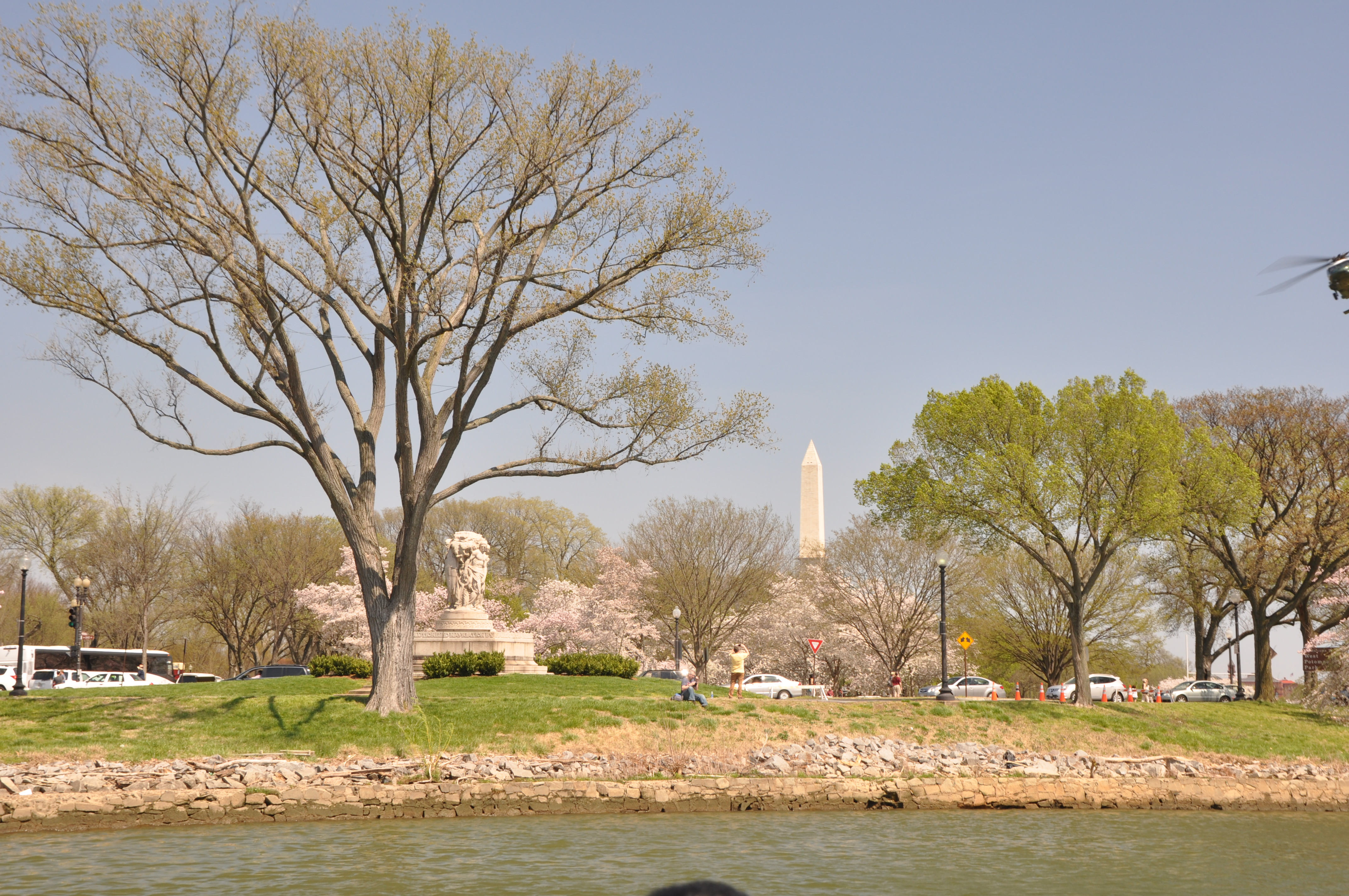 Washington, D.C., cherry blossoms